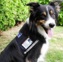 reflective service dog vest with id