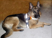 Search and Rescue Harness