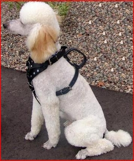 Guide Dog Harness