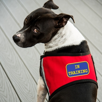 Service Dog In Training Vests